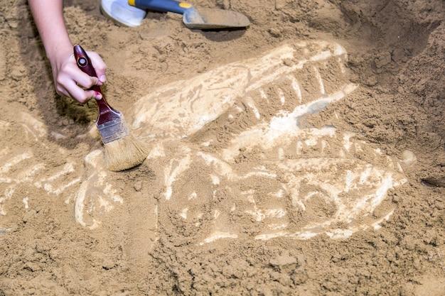 Escavação de fósseis de dinossauros