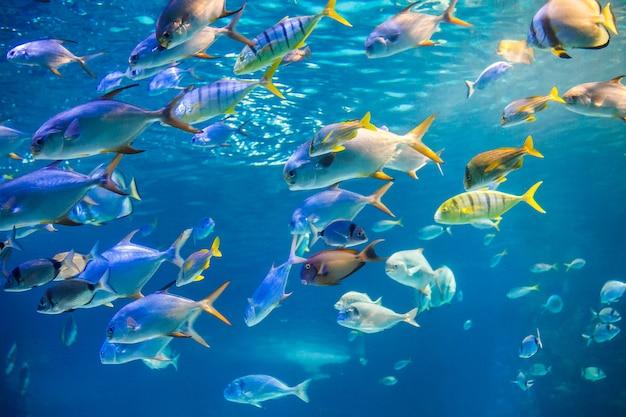 Escola de peixes do mar estão nadando para a superfície da água