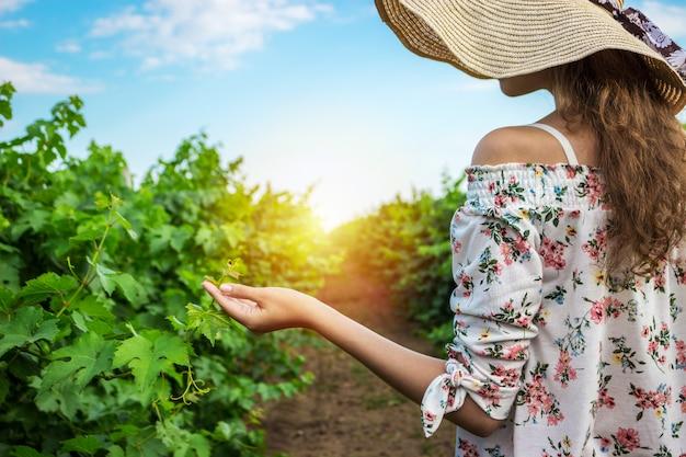 Escolha da uva da mulher do turista da adega do vinhedo.