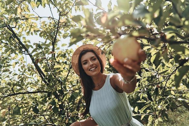Escolhendo o melhor. mulher jovem e atraente colhendo maçãs e sorrindo em pé no jardim