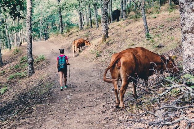 Escoteira caminhando e caminhando entre as vacas na floresta.