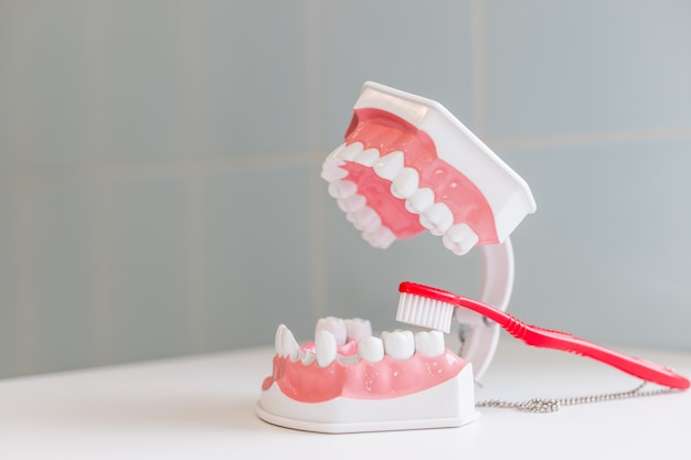 Escova de dentes e mandíbula isolado na tabela.