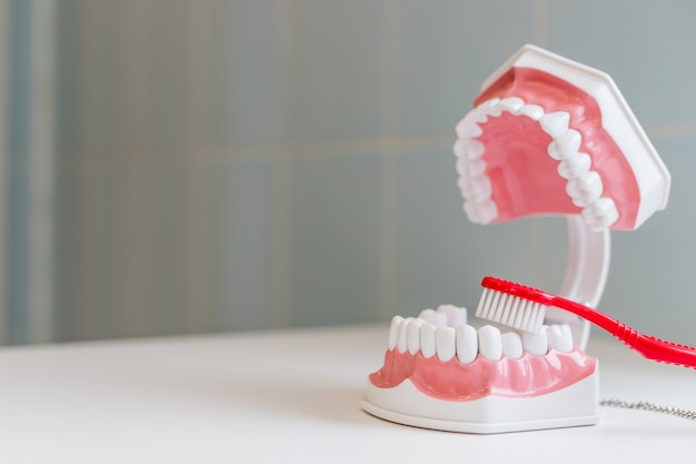 Escova de dentes e mandíbula. tratamento de higiene completo e mantenha um sorriso saudável e branco. dicas de higiene. mantenha-se saudável.