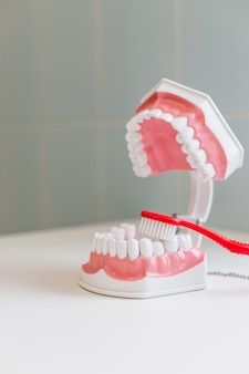 Escova de dentes e mandíbula