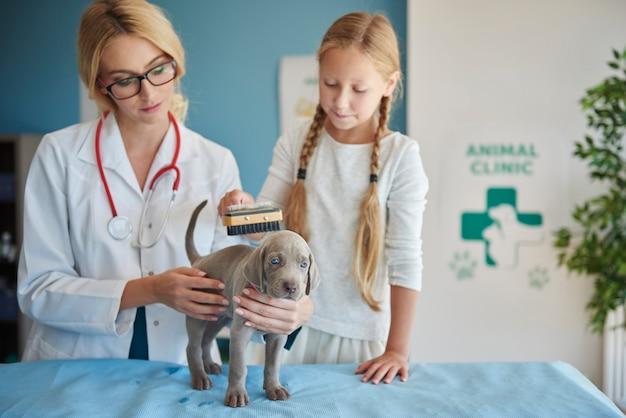 Escovando pelo de cachorro no veterinário