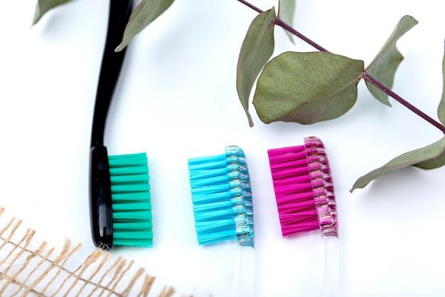 Escovas de dente e um galho de eucalipto em um fundo branco.