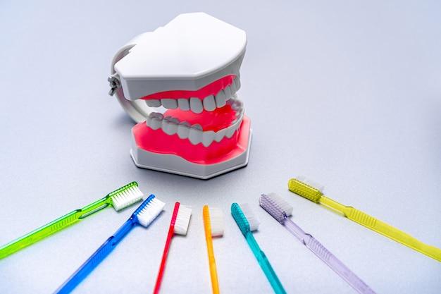 Escovas de dentes coloridas estão dispostas em torno de um modelo educacional de mandíbula. conceito de higiene bucal.