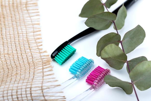 Escovas de dentes de diferentes cores e um ramo de eucalipto em um fundo branco.