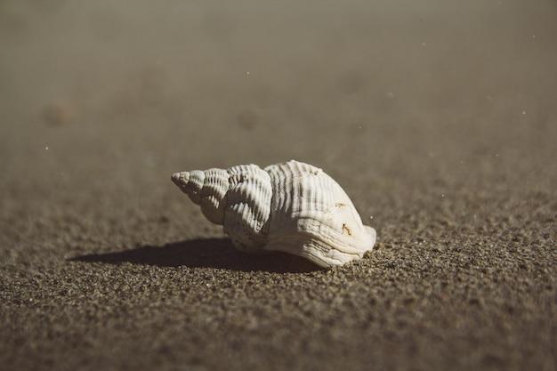 Escudo do mar na praia de areia. fundo de verão. copie o espaço. pode usar como banner