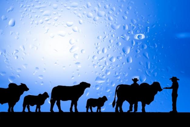 Escultura silhueta cowboys. e gado em um fundo azul.