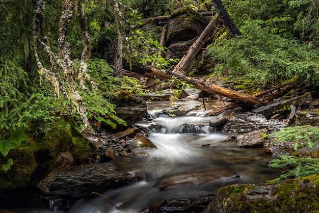 Escuro e úmido holland creek em montana