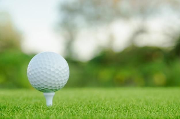 Esfera de golfe com o t branco na grama verde pronto para jogar no campo de golfe.