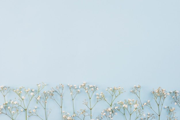 Espaço de cópia de fundo de flores