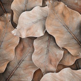 Espaço de design com padrão de folha bege