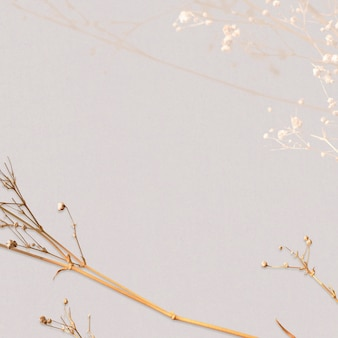 Espaço de design natural floral seco