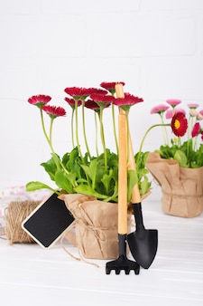 Espaço de trabalho, plantando flores da primavera. ferramentas de jardim, plantas em vasos e regador na mesa branca