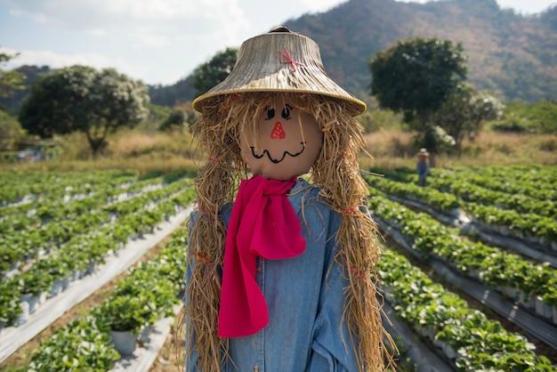 Espantalho de colheita na fazenda de morango