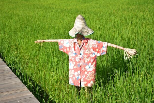Espantalho em campo de arroz verde