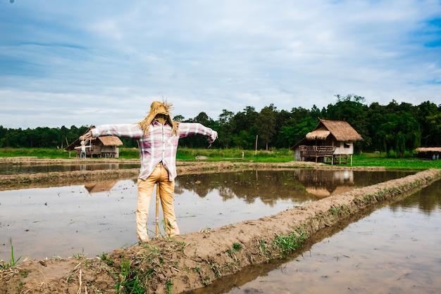 Espantalho em pé no campo de arroz
