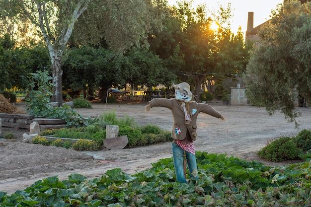 Espantalho no campo agrícola ao pôr do sol