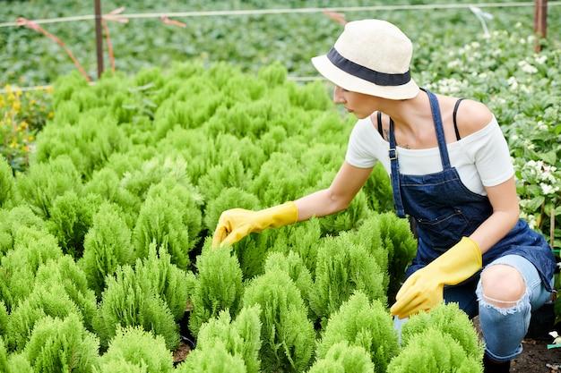 Especialista em jardinagem verificando plantas de cipreste