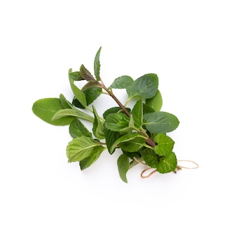 Especiaria folhas de ervas e pimenta em fundo branco. padrão de vegetais. floral e vegetais em fundo branco. vista superior, configuração plana.