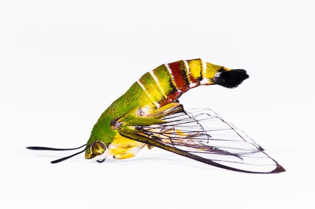 Espécies de insetos se assemelham a uma borboleta.