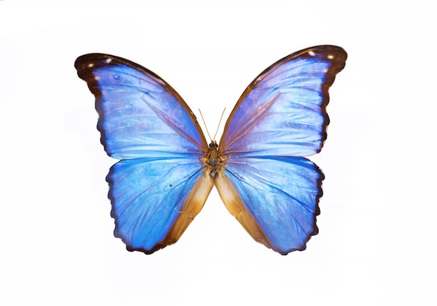 Espécime de borboleta linda