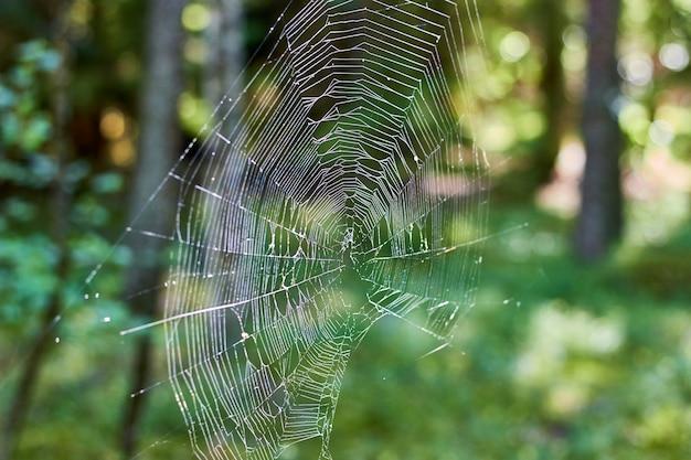 Espessa teia de aranha no fundo de uma floresta ensolarada