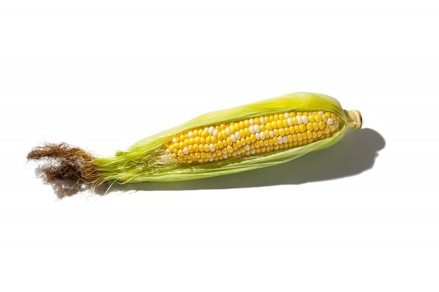 Espiga de milho com folhas
