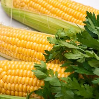 Espiga de milho e salsa