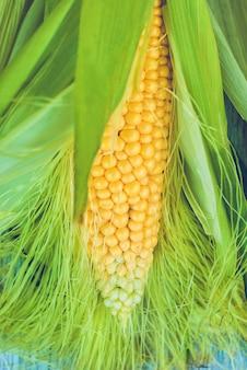 Espiga de milho fresco entre folhas verdes