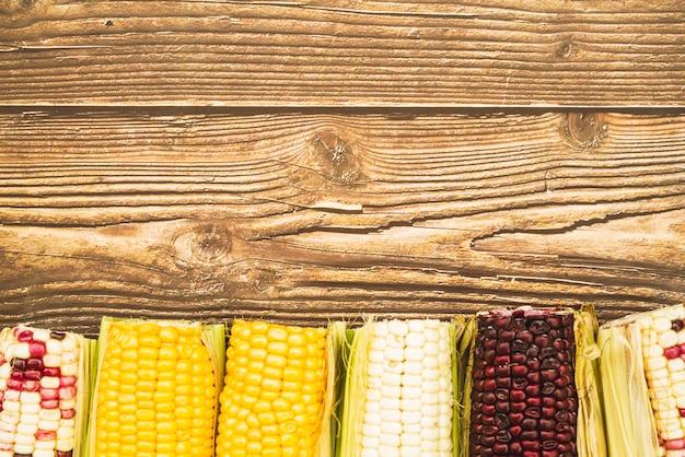Espiga de milho multicolorida na mesa de madeira