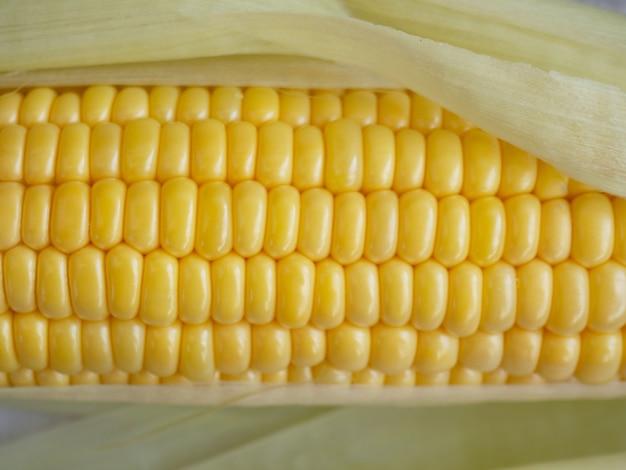 Espiga de milho perto do fundo