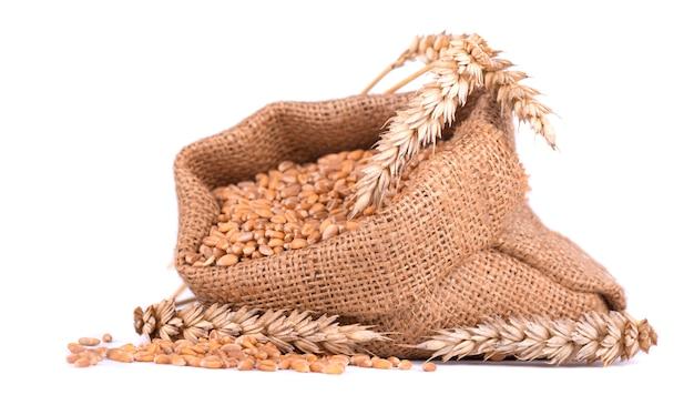 Espiga de trigo e grãos de trigo no saco de serapilheira, isolado no espaço em branco