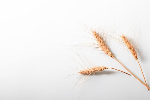 Espigas de cereais de orelhas secas de centeio na luz de fundo