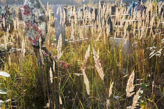 Espigas de grama seca de outono crescendo no cemitério ao sol