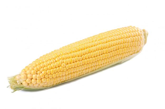 Espigas de milho frescas, isoladas no branco