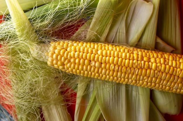 Espigas de milho frescas orgânicas na folhagem em fundo vermelho