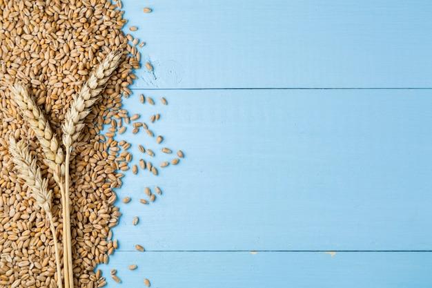 Espigas de trigo dourado maduro sobre fundo azul de madeira