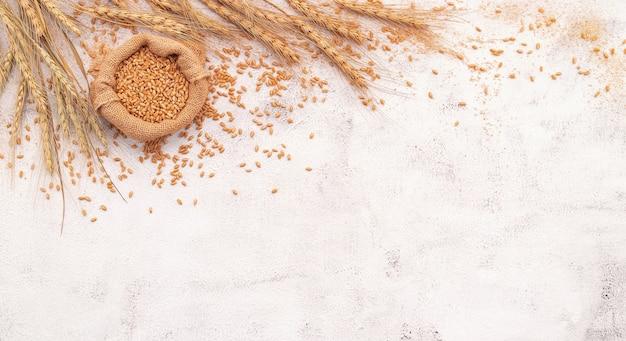 Espigas de trigo e grãos de trigo montados em fundo branco de concreto.