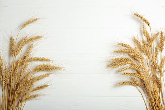 Espigas de trigo e grãos em um fundo claro