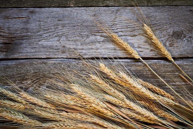 Espigas de trigo e grãos em uma placa de madeira escura