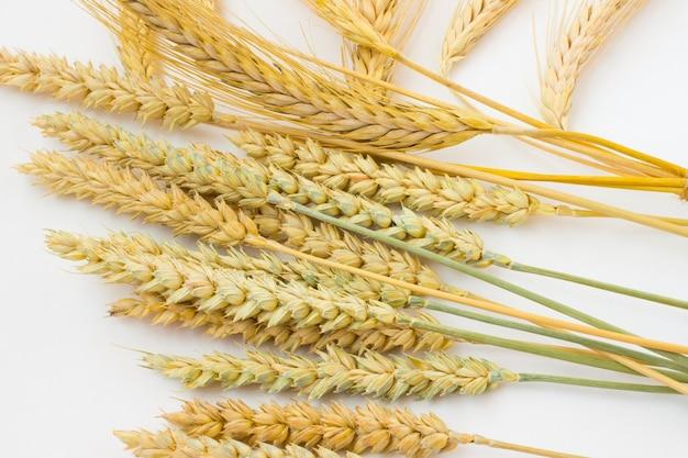 Espigas de trigo em um espaço em branco.