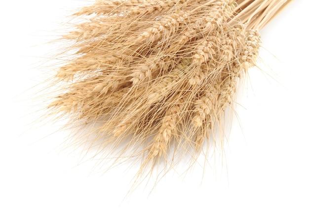 Espigas de trigo em um fundo branco