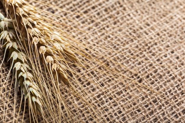 Espigas de trigo em um saco