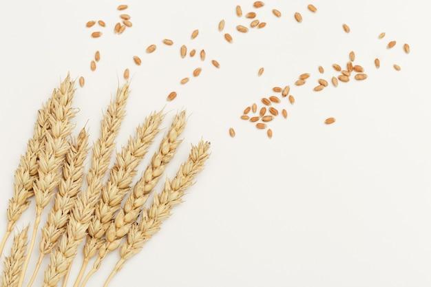 Espigas e sementes de trigo dourado maduro fecham. fundo com amadurecimento das orelhas da planta de cereal.