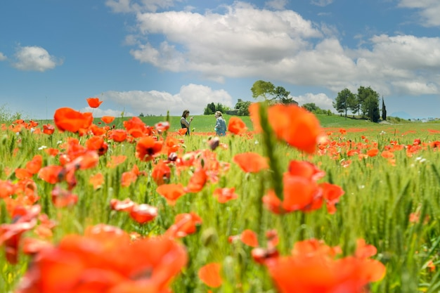 Espiguetas verdes crescem em um campo agrícola com flores vermelhas desfocadas no fundo da natureza