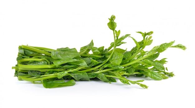 Espinafre de malabar ou espinafre de ceilão na mesa branca