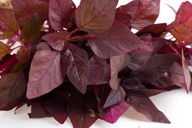 Espinafre vermelho ou amaranto vermelho, um ramo de amaranto fresco da fazenda disposto em um fundo branco